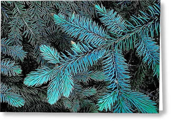 Greeting Card featuring the photograph Blue Spruce by Daniel Thompson