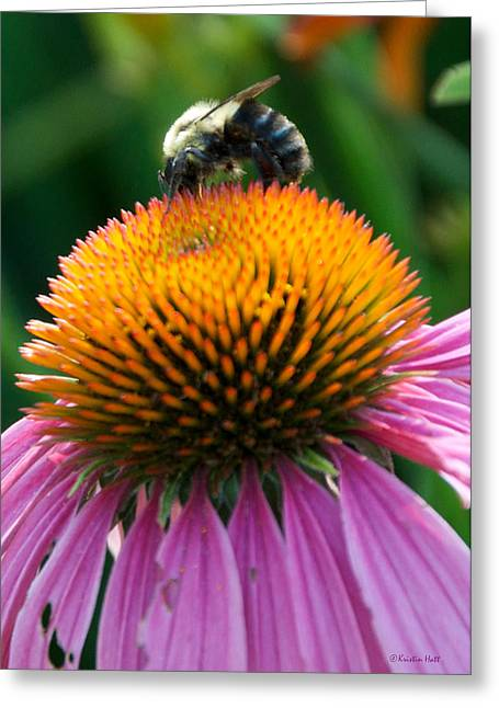 Blue Striped Bee Greeting Card