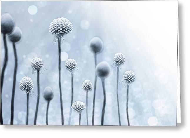 Blue Sunshine Greeting Card by Lisa Knechtel