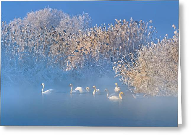 Blue Swan Lake Greeting Card