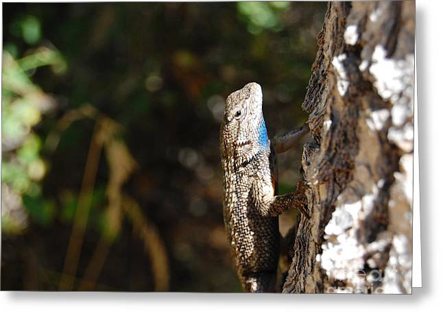 Greeting Card featuring the photograph Blue Throated Lizard 2 by Debra Thompson
