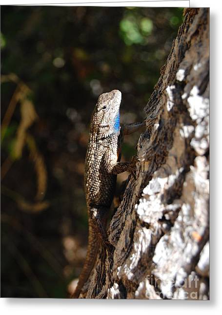 Greeting Card featuring the photograph Blue Throated Lizard 3 by Debra Thompson