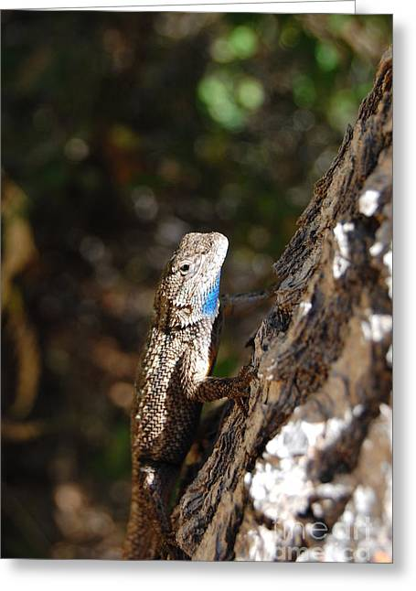 Greeting Card featuring the photograph Blue Throated Lizard 4 by Debra Thompson
