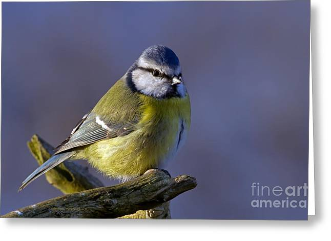 Blue Tit In The Blue Greeting Card by Torbjorn Swenelius
