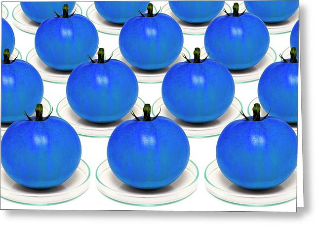 Blue Tomatoes On Petri Dishes Greeting Card