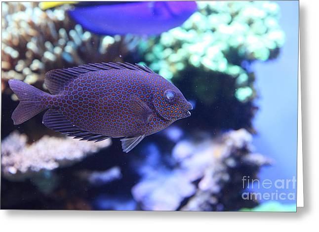 Blue Tropical Fish 5d24892 Greeting Card