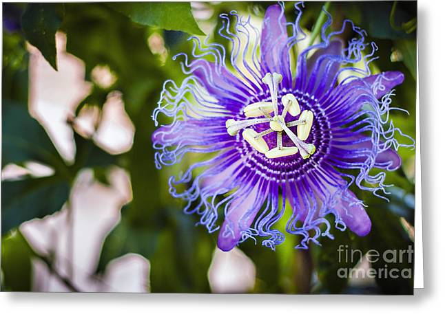 Blue Violet Greeting Card by Lacie Oakey