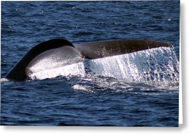 Blue Whale Flukes 2 Greeting Card by Valerie Broesch