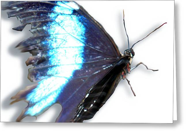 Blue Winged Thing Greeting Card by Kryztina Spence
