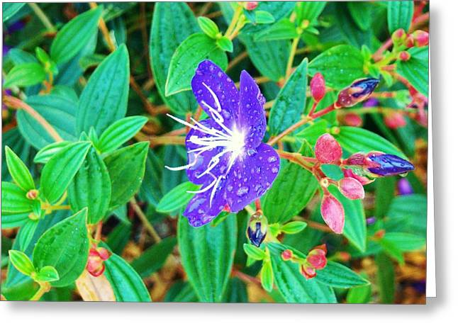 Blue With Dew Greeting Card by Van Ness