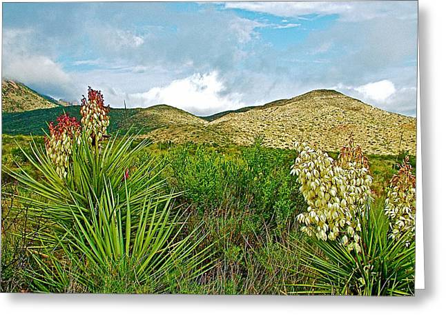 Blue Yucca And Chisos Mountains In Big Bend National Park-texas Greeting Card by Ruth Hager