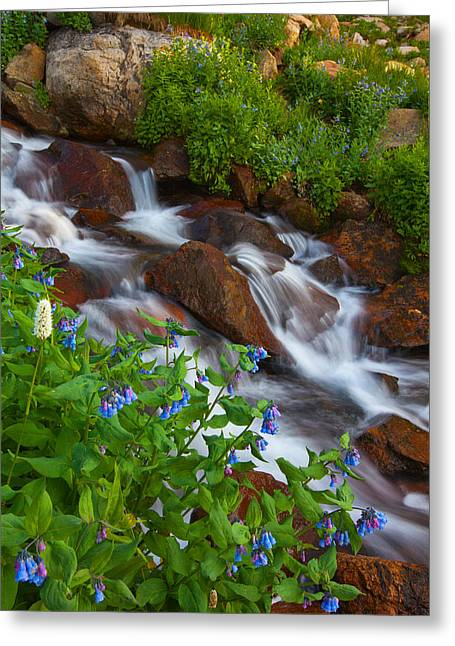 Bluebell Creek Greeting Card by Darren  White