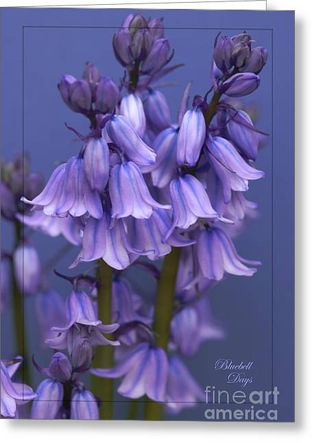 Bluebell Days Greeting Card