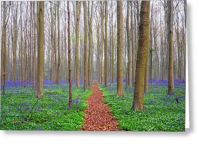 Bluebell Flowers In Hardwood Beech Greeting Card