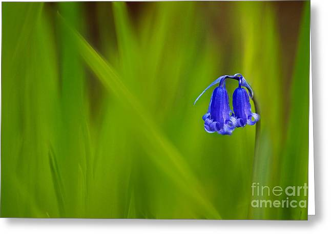 Bluebell Greeting Card by Janet Burdon