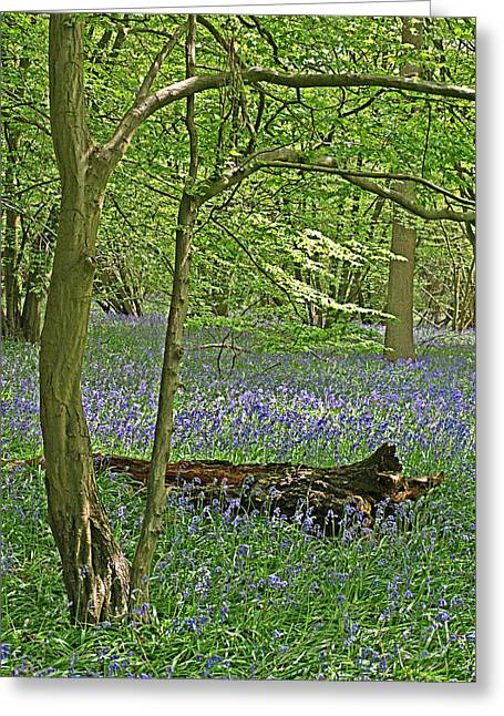 Bluebell Wood 1 Greeting Card by Gill Billington