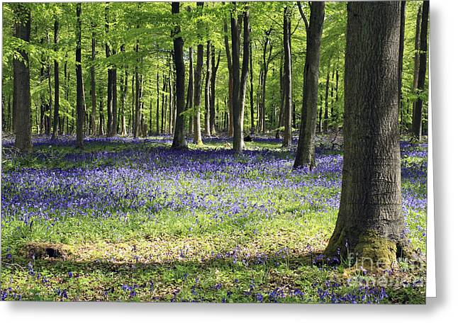 Bluebell Wood Uk Greeting Card