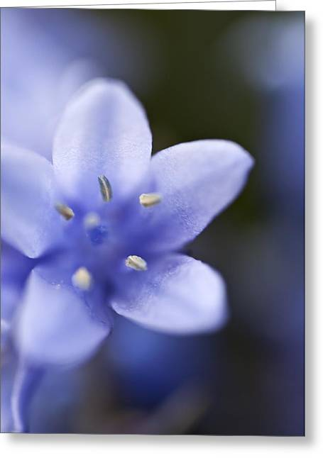 Bluebells 4 Greeting Card by Steve Purnell