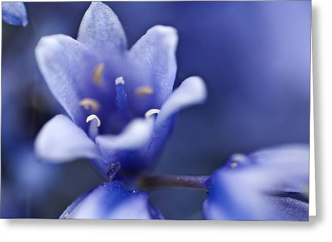 Bluebells 6 Greeting Card by Steve Purnell