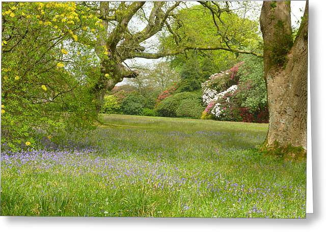 Bluebells And Rhododendrons Greeting Card by Rob Sherwood