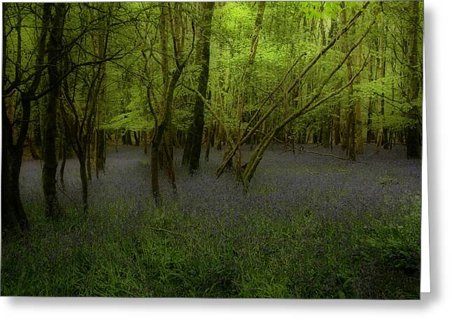 Bluebells Dream Greeting Card by Peter Skelton
