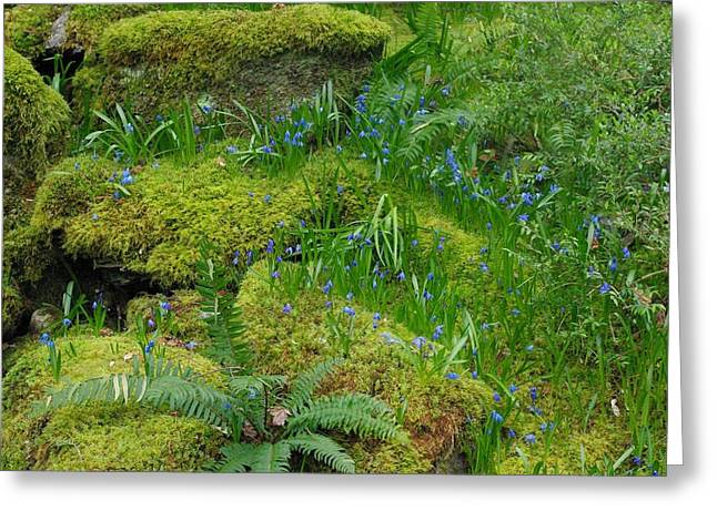Greeting Card featuring the photograph Bluebells  by Marilyn Wilson