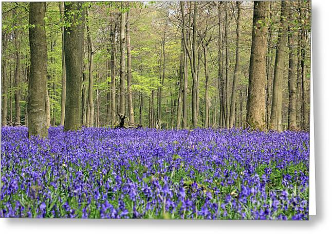 Bluebells Surrey England Uk Greeting Card