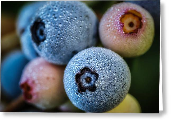 Blueberries In Morning Dew Greeting Card by James Barber