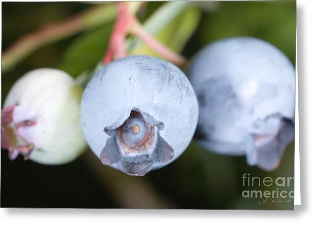 Blueberries On Bush Greeting Card by Iris Richardson