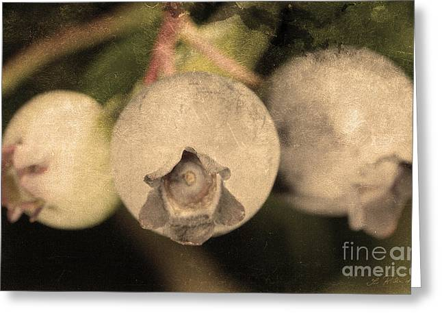 Blueberries On Bush Sepia Tone Greeting Card by Iris Richardson