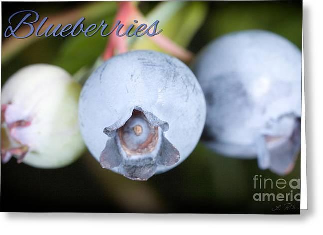 Blueberries On Bush Trio Greeting Card by Iris Richardson