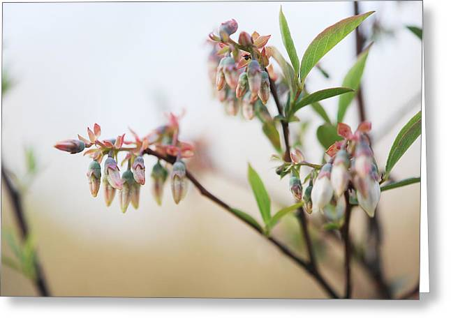 Blueberry Bush Greeting Card by Giffin Photography