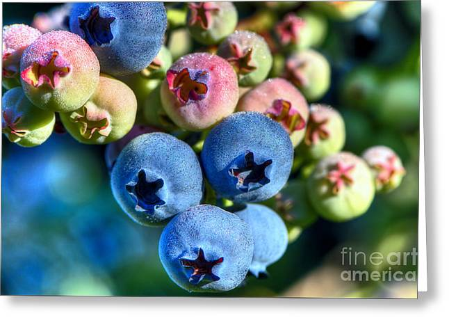 Blueberry Dew Greeting Card