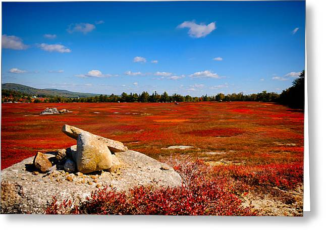 Blueberry Field In Falls Greeting Card by Mark Silk