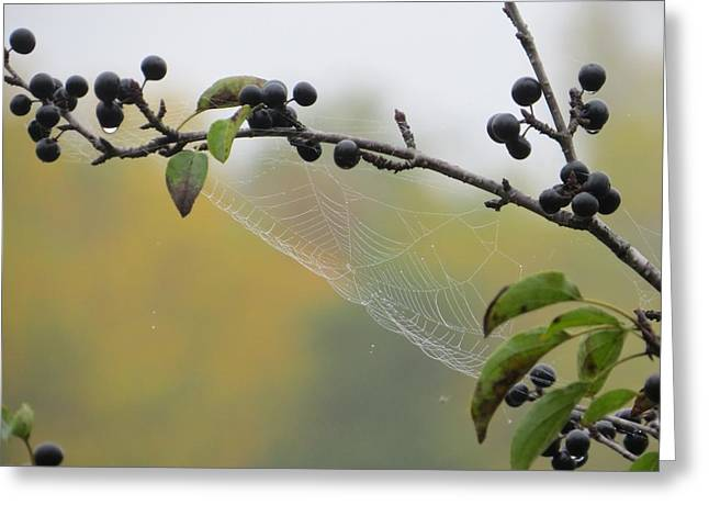 Blueberry Web Greeting Card by Nikki McInnes