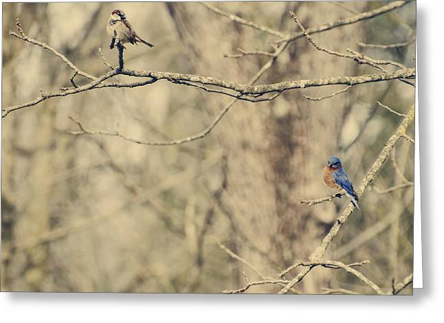 Bluebird And Sparrow Greeting Card