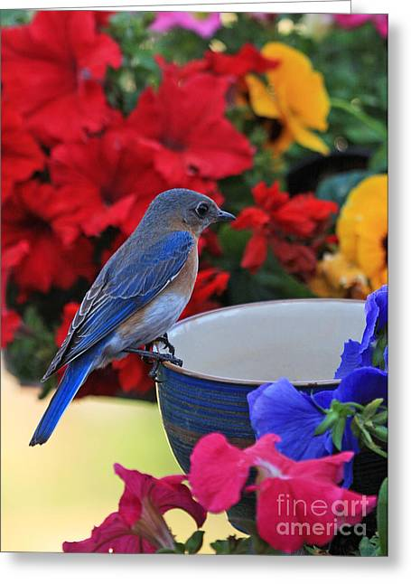 Bluebird Breakfast Greeting Card