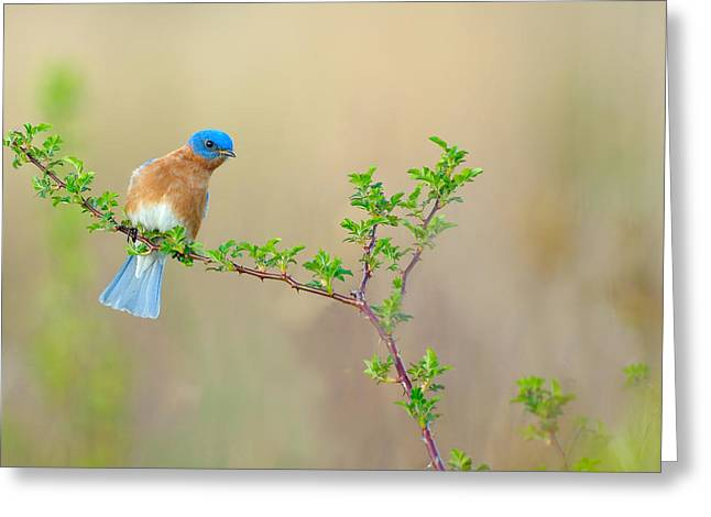 Bluebird Breeze Greeting Card