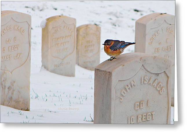 Bluebird Greeting Card by Chris Berry