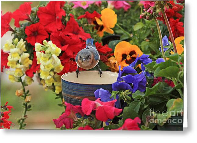 Bluebird Garden Greeting Card