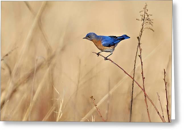 Bluebird Meadow Greeting Card