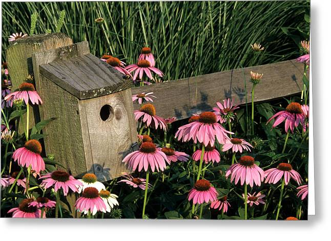 Bluebird Nest Box On Fence Near Purple Greeting Card by Richard and Susan Day