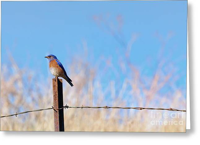 Bluebird On A Post Greeting Card by Mike  Dawson