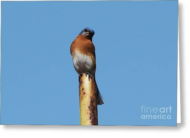 Bluebird Greeting Card by Theresa Willingham
