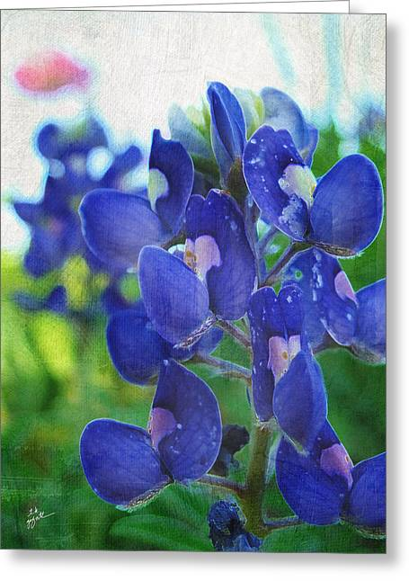 Bluebonnet Charmer Greeting Card by TK Goforth