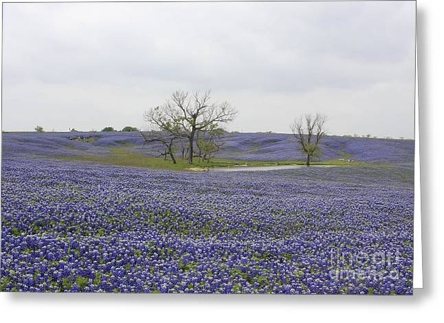 Bluebonnet Oasis Greeting Card by Jerry Bunger