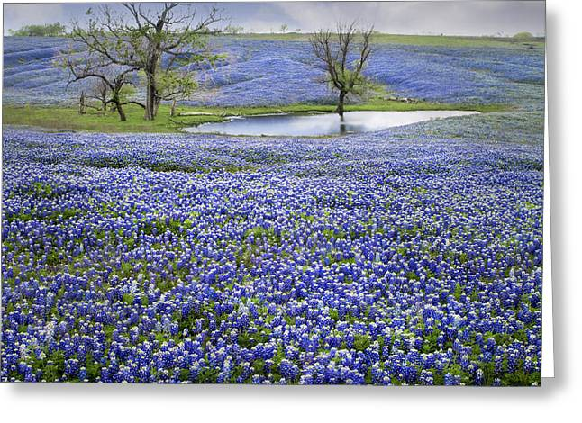 Bluebonnet Pond Greeting Card by David and Carol Kelly