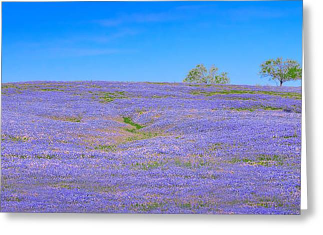Greeting Card featuring the photograph Bluebonnet Vista Texas  - Wildflowers Landscape Flowers  by Jon Holiday