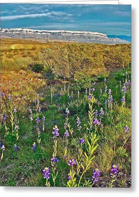 Bluebonnets And Creosote Bushes In Big Bend National Park-texas Greeting Card