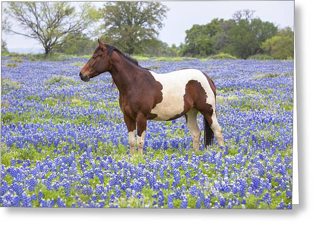 Bluebonnets And Horses 3 Greeting Card by Rob Greebon